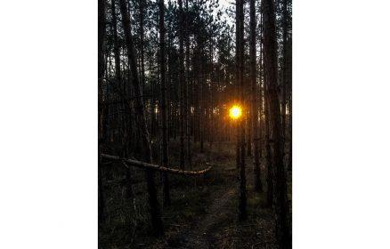 Visite guidée – La forêt du Touquet à la lueur des lanternes